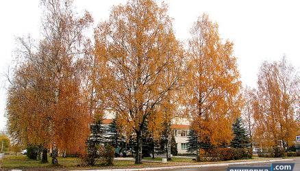 В Окуловке исполняется контракт по спилу деревьев на улицах Ленина и Кирова